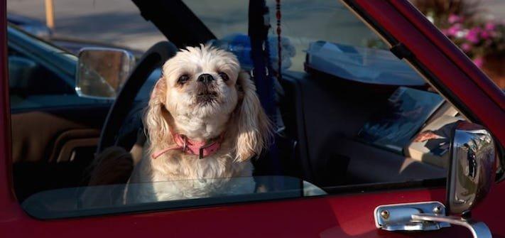 zásady seznam co nedělat svému psovi psům zakázané věci zakázaný seznam 1