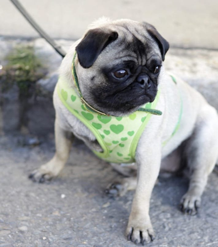 zásady seznam co nedělat svému psovi psům zakázané věci zakázaný seznam 5