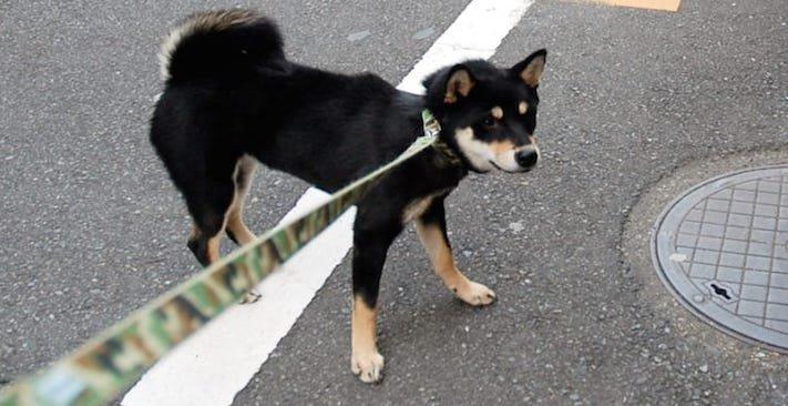 zásady seznam co nedělat svému psovi psům zakázané věci zakázaný seznam 6