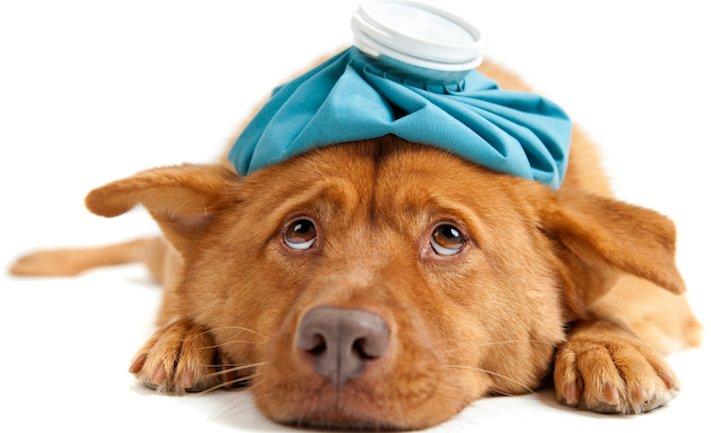 zásady seznam co nedělat svému psovi psům zakázané věci zakázaný seznam 7