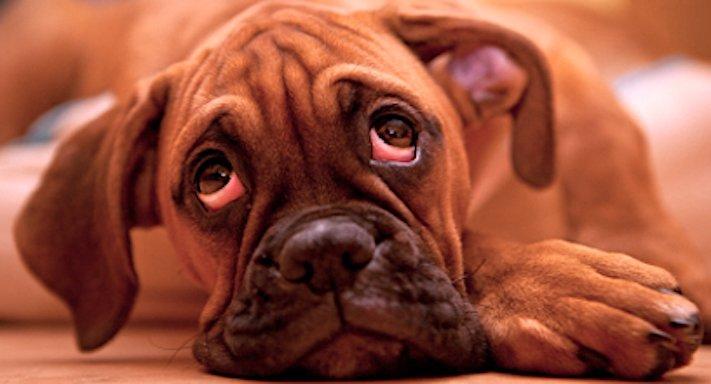 zásady seznam co nedělat svému psovi psům zakázané věci zakázaný seznam 9