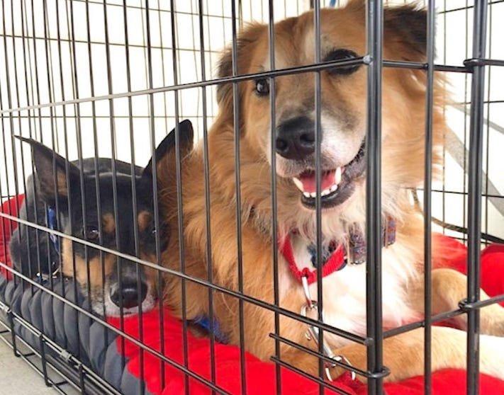 zásady seznam co nedělat svému psovi psům zakázané věci zakázaný seznam 10