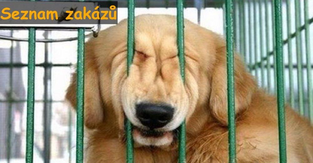psi pes seznam zakázaných věcí co nedělat psovi psům
