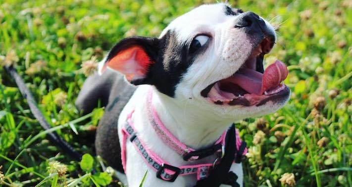 pes jako zralok sune se po koberci zábavné video se psem psí příběhy život psa 1