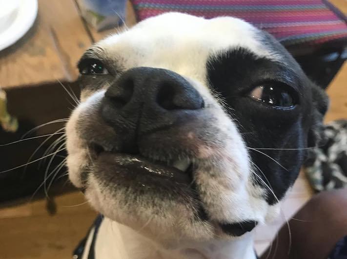 pes jako zralok sune se po koberci zábavné video se psem psí příběhy život psa 2