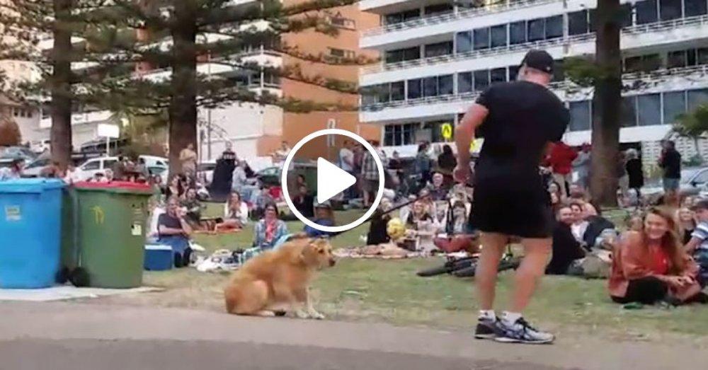 zlatý retrívr pes hraje mrtvého video chce zůstat v parku se psy