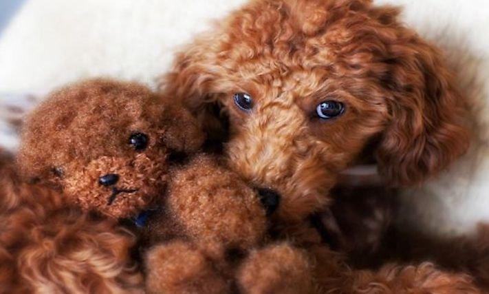 nejroztomilejší štěňata nejlepší obrázky se štěňaty štěňě vypadá jako medvěd fotoalbum 7