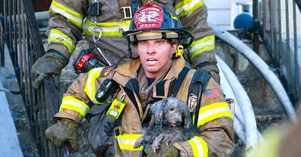 hasiči riskují život pro záchranu psa psů obrázky video fotoalbum