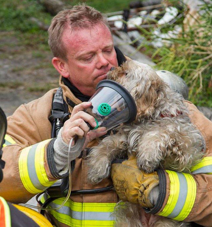 hasiči riskují život pro záchranu psa psů obrázky video fotoalbum 3