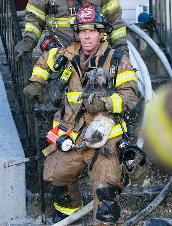 hasiči riskují život pro záchranu psa psů obrázky video fotoalbum 5
