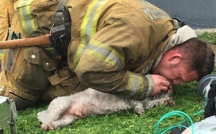hasiči riskují život pro záchranu psa psů obrázky video fotoalbum 6
