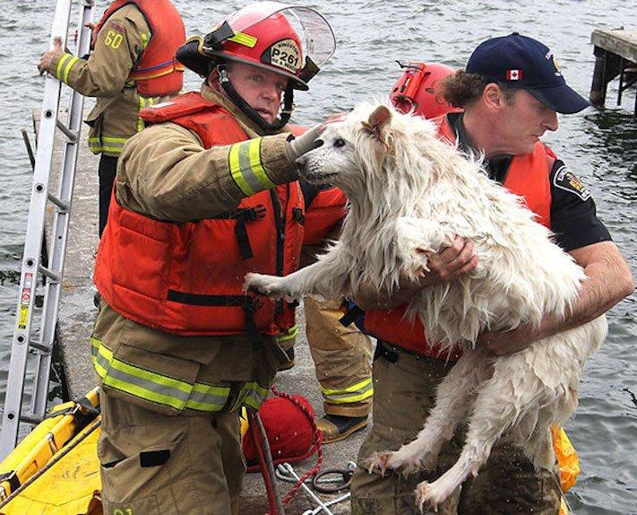 hasiči riskují život pro záchranu psa psů obrázky video fotoalbum 7