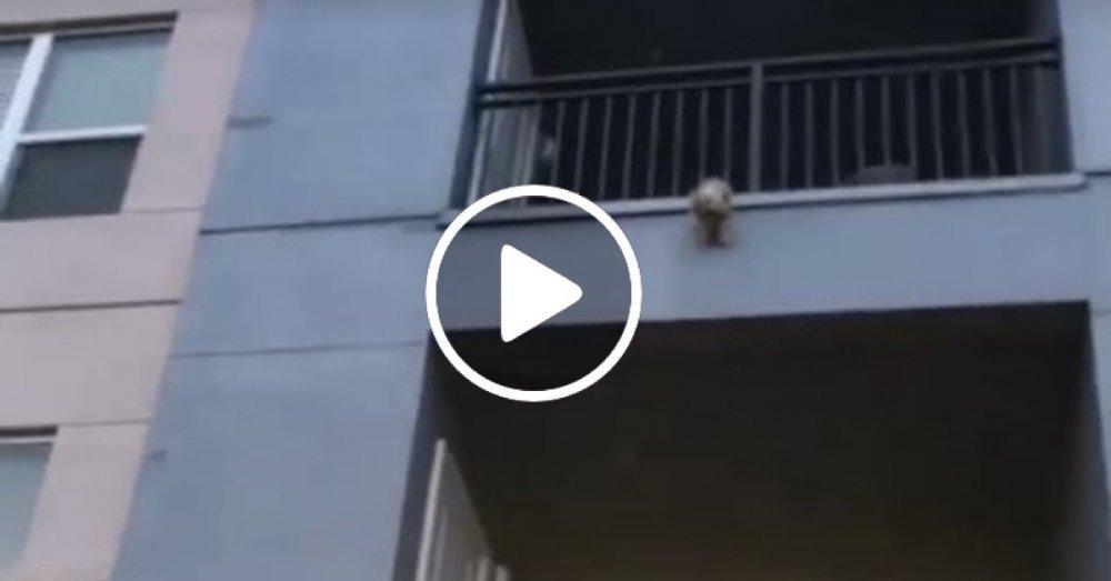 pes skáče z bálkónu pes sám na balkóně video