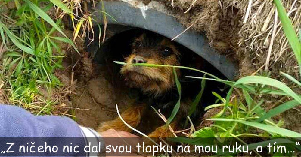 opuštěné štěně v lese v rouře polsko česká republika psí příběhy