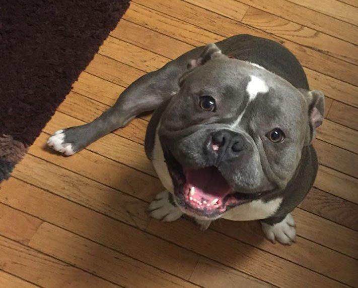 adopce psa z útulku psí příběhy zkušenosti diskuze diskuzní fórum 2