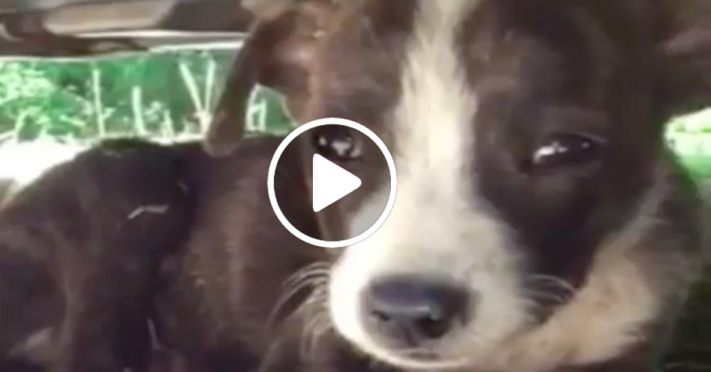 adopce psa záchrana