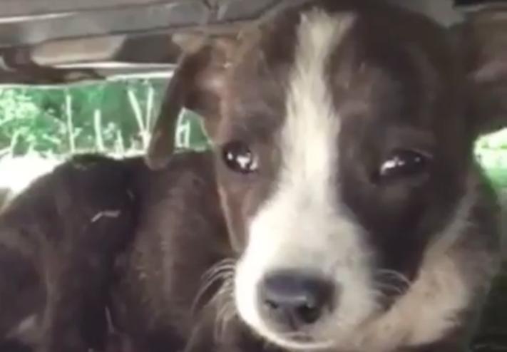 opuštěné malé štěně v záchranné stacini pomoc psům 1