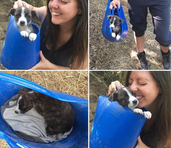 opuštěné malé štěně v záchranné stacini pomoc psům 2