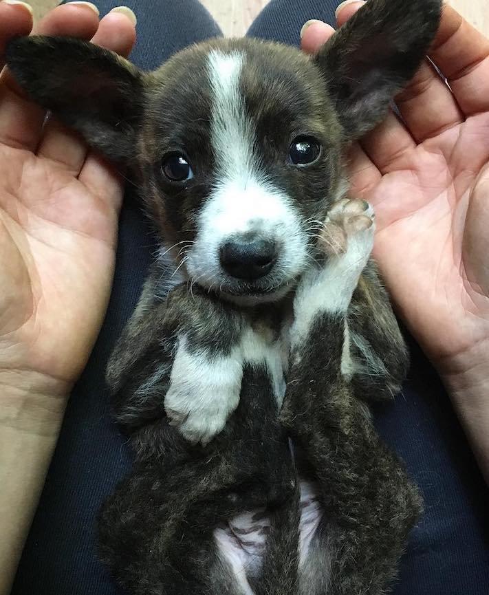 opuštěné malé štěně v záchranné stacini pomoc psům 3