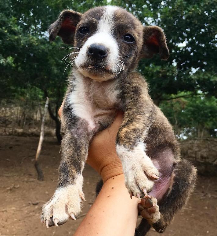 opuštěné malé štěně v záchranné stacini pomoc psům 5