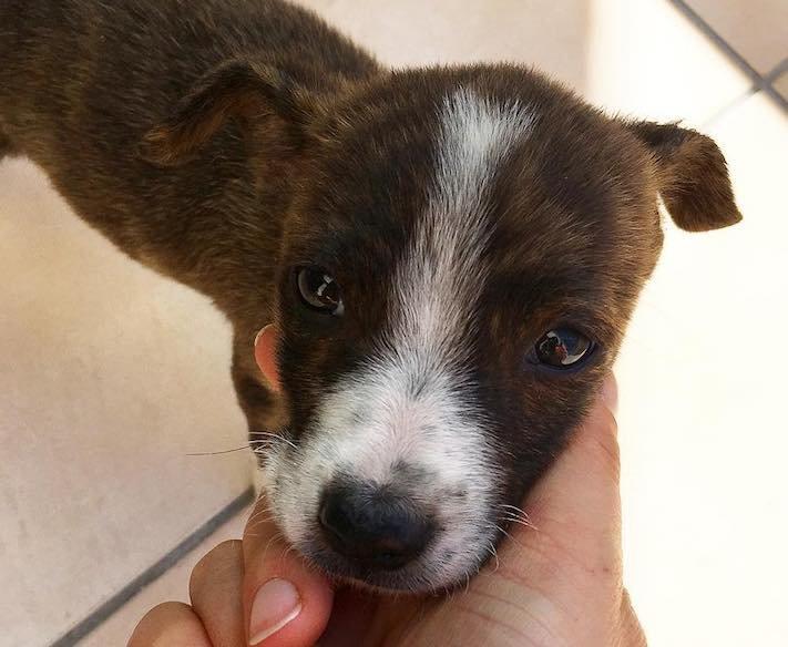 opuštěné malé štěně v záchranné stacini pomoc psům 8