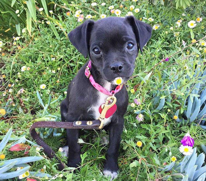 černí psi štěně z útulku adopce nekupujadoptuj nekupuj adoptuj 1