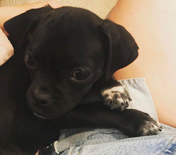 černí psi štěně z útulku adopce nekupujadoptuj nekupuj adoptuj 3