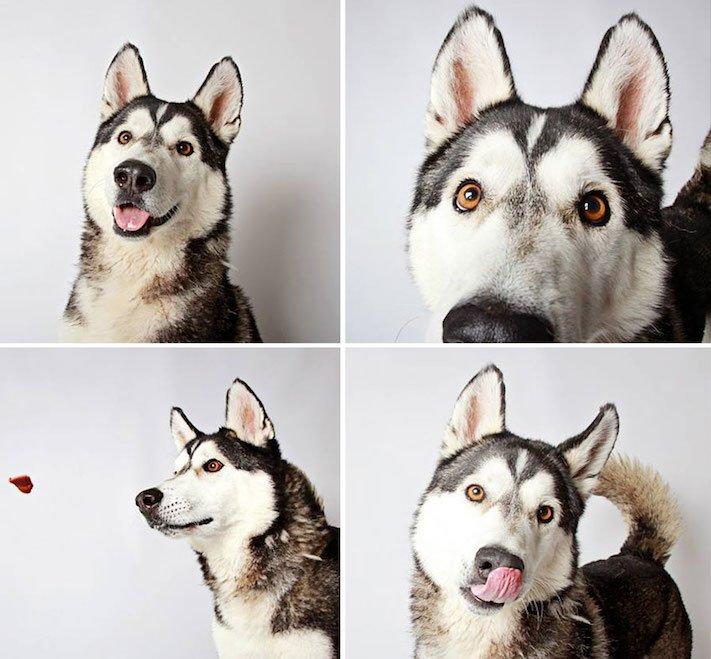 fotografie obrázky psů pitbulů z útulku pro adopci 2