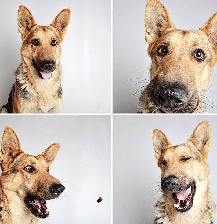 fotografie obrázky psů pitbulů z útulku pro adopci 13