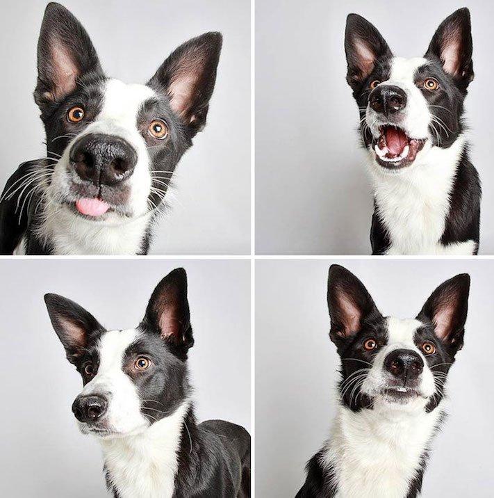 fotografie obrázky psů pitbulů z útulku pro adopci 14