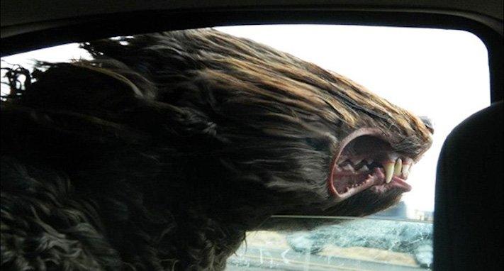 pes miluje nesnáší jízdu autem k veterináři pes do auta vtipná zábavná obrázky videa