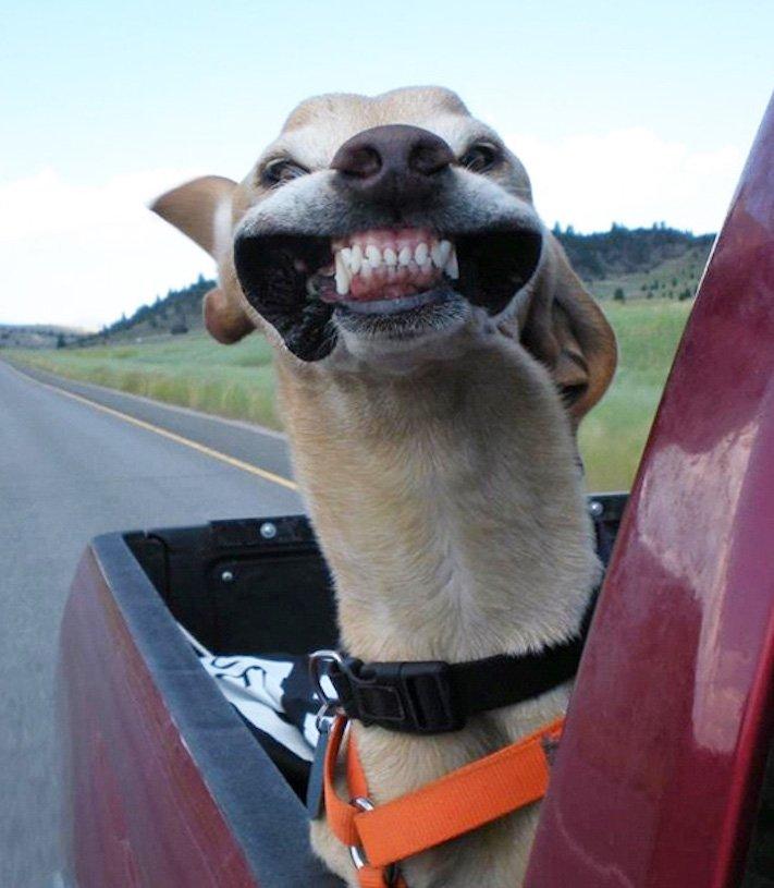 pes miluje nesnáší jízdu autem k veterináři pes do auta vtipná zábavná obrázky videa 3