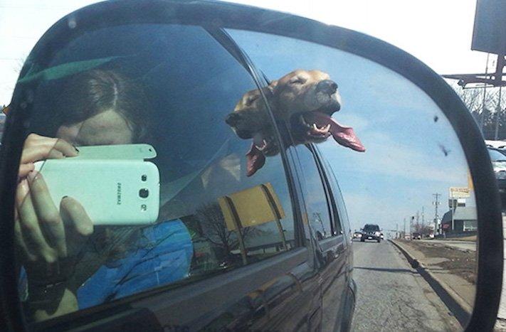 pes miluje nesnáší jízdu autem k veterináři pes do auta vtipná zábavná obrázky videa 10