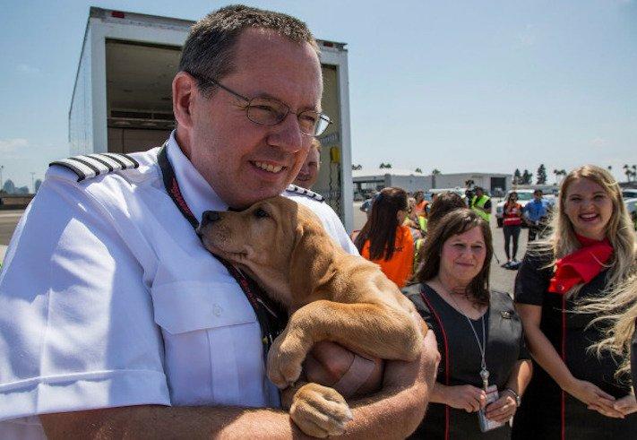 záchrana psů z povodně po hurikánu útulky adopce psa hurikán harvey 1