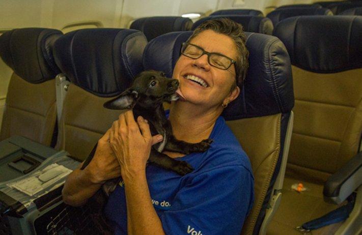 záchrana psů z povodně po hurikánu útulky adopce psa hurikán harvey 4