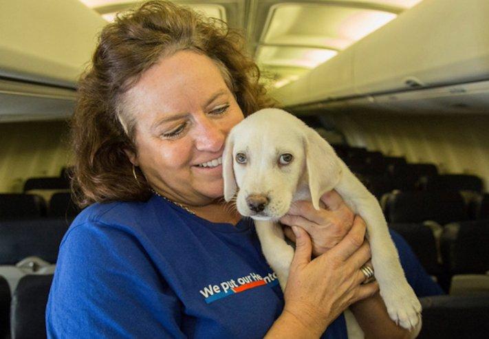 záchrana psů z povodně po hurikánu útulky adopce psa hurikán harvey 4b