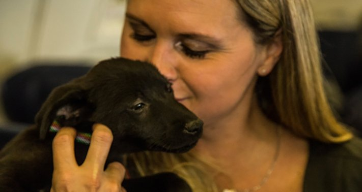 záchrana psů z povodně po hurikánu útulky adopce psa hurikán harvey 4c