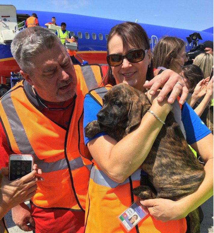 záchrana psů z povodně po hurikánu útulky adopce psa hurikán harvey 4d