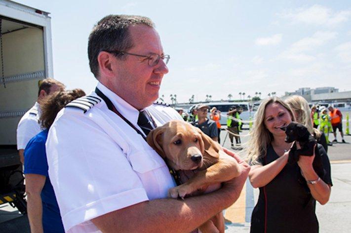 záchrana psů z povodně po hurikánu útulky adopce psa hurikán harvey 5