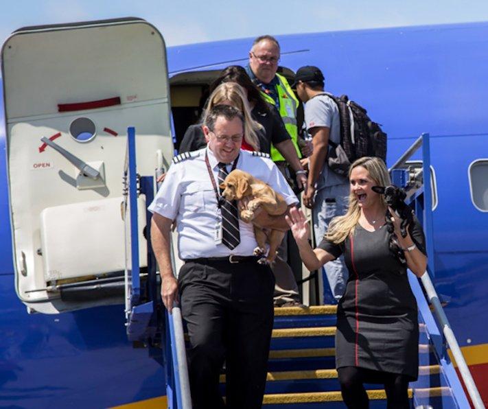 záchrana psů z povodně po hurikánu útulky adopce psa hurikán harvey 5a