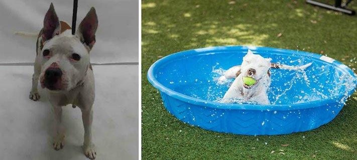 obrázky psů k adopci útulky z útulku fotoalbum psů psí adopce nekupuj adoptuj 4