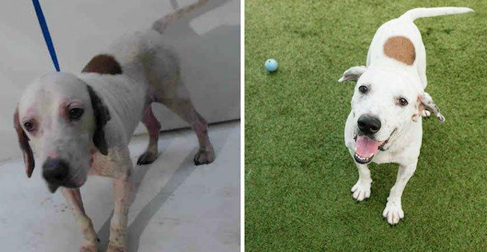 obrázky psů k adopci útulky z útulku fotoalbum psů psí adopce nekupuj adoptuj 1