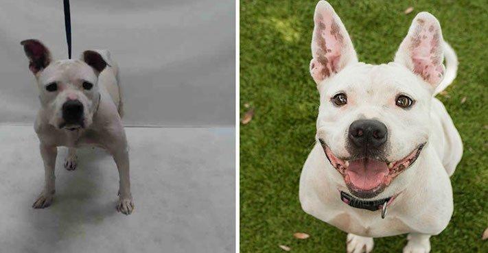 obrázky psů k adopci útulky z útulku fotoalbum psů psí adopce nekupuj adoptuj 2