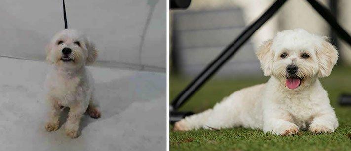 obrázky psů k adopci útulky z útulku fotoalbum psů psí adopce nekupuj adoptuj 6