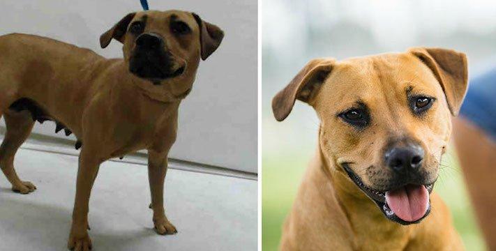 obrázky psů k adopci útulky z útulku fotoalbum psů psí adopce nekupuj adoptuj 9