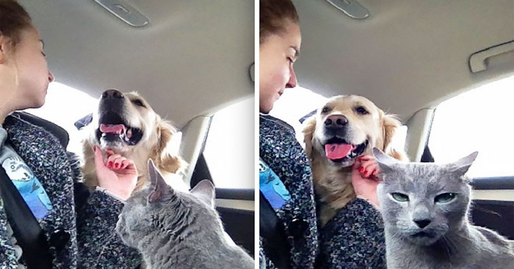 psi versus kočky zábavné vtipné nejlepší obrázky fotky fotografie fotoalbum
