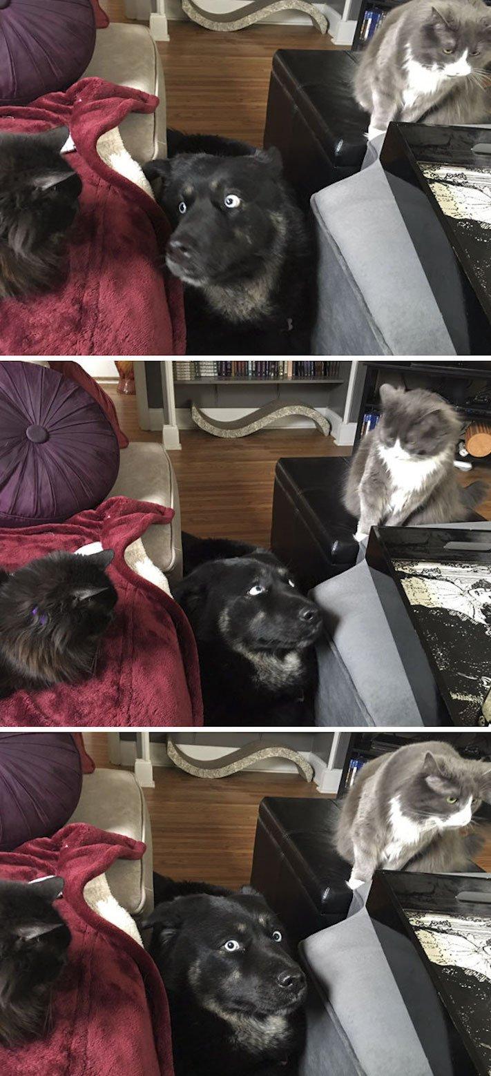 psi versus kočky zábavné vtipné nejlepší obrázky fotky fotografie fotoalbum 1
