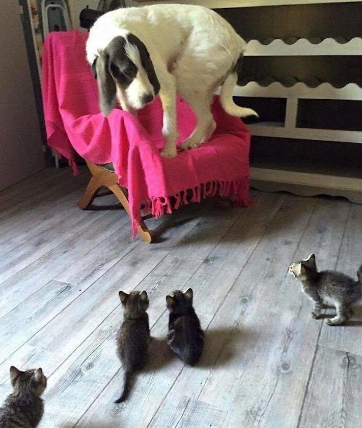 psi versus kočky zábavné vtipné nejlepší obrázky fotky fotografie fotoalbum 3