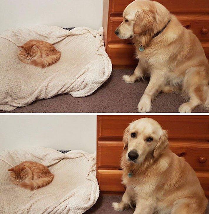 psi versus kočky zábavné vtipné nejlepší obrázky fotky fotografie fotoalbum 5