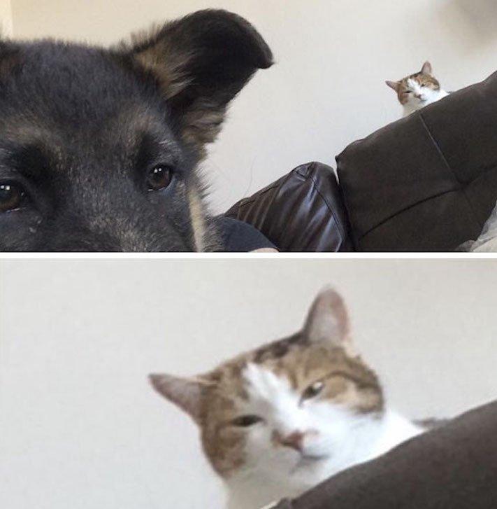 psi versus kočky zábavné vtipné nejlepší obrázky fotky fotografie fotoalbum 6